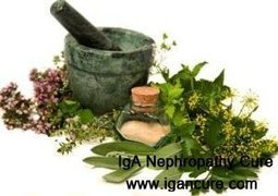 Herbs to Reduce Protein in Urine for FSGS Stage 4 Patients_IGA Cure   igancure.com   Scoop.it