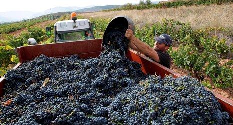 Rothschilds Take a Gamble on Spain's Rioja | Prensa Extranjera | Scoop.it