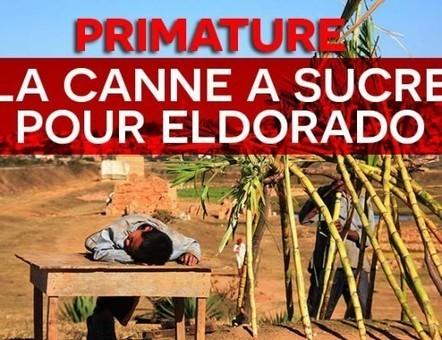 DwizerNews, actualité et information à Madagascar | Politique, société | Scoop.it