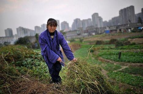 En Chine, 20 % des terres arables sont polluées | Chine Actu | Scoop.it