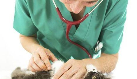 Faut-il souscrire une assurance santé pour son chien ou chat ? - L'Express | Assurance | Scoop.it