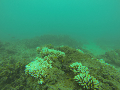 Reef condition is 'poor', and probably worse than healthcheck suggests | Masada Geography | Scoop.it