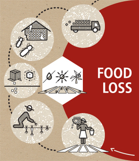 Technical Platform on the Measurement and Reduction of Food Loss and Waste | FAO | Food and Agriculture Organization of the United Nations | Agrarforschung | Scoop.it