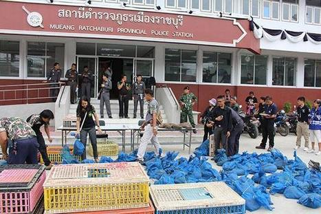 Truckload of pangolins seized in Ratchaburi | Endangered Species News | Scoop.it