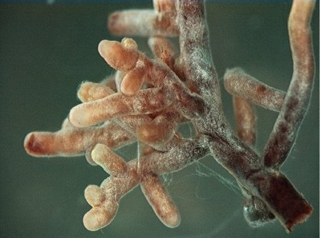 Scoop.it: Mycorrhizal fungal genomes (2014) | Neurology and Psychology | Scoop.it
