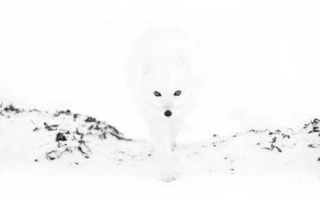 ALLPE Medio Ambiente Blog Medioambiente.org : Sólo un zorro ...   Más que agua   Scoop.it