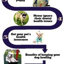 Effective Ways to Keep Your Dog Healthy | Visual.ly | Castlewood Bulldogs | Scoop.it