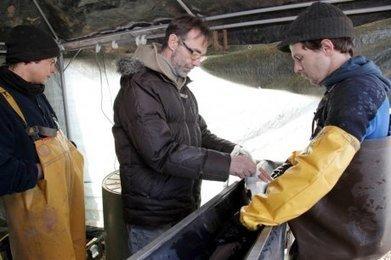 Les projets du caviar de Neuvic (24) | Agriculture en Dordogne | Scoop.it