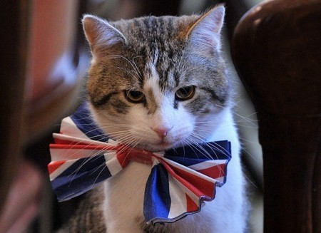 PAS LA NIAQUE – David Cameron déteste-t-il Larry, le chat du 10 Downing street ? | Les chats c'est pas que des connards | Scoop.it