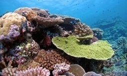 Planting coral could save Great Barrier Reef from climate change, say scientists | GarryRogers NatCon News | Scoop.it