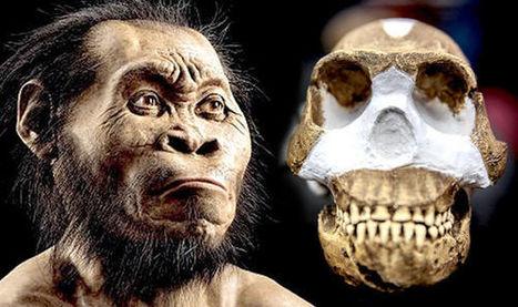 Se agudiza el debate sobre el 'Homo naledi' | Arqueología, Historia Antigua y Medieval - Archeology, Ancient and Medieval History byTerrae Antiqvae | Scoop.it