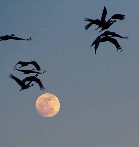 THE TAO OF CRANES | Complex Systems and X-Events | Scoop.it