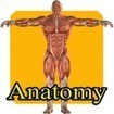 Human anatomy 4 kids for Android - AppsZoom.com | Yr 10 inheritance | Scoop.it