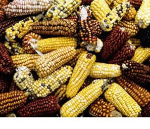 El impacto de la sequía de Estados Unidos en América Latina | Radio de las Naciones Unidas | Río+20 El Salvador | Scoop.it