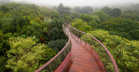 A Canopy Walkway In Cape Town Allows You To Walk Above The Trees | 16s3d: Bestioles, opinions & pétitions | Scoop.it