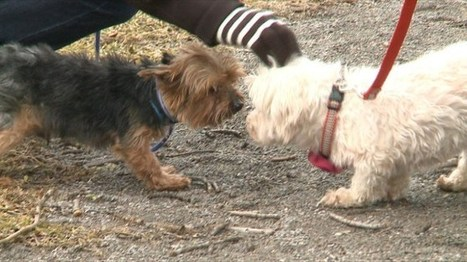 Charity dogs treated to park day - WKBN/WYFX-TV | Acts of Kindness | Scoop.it