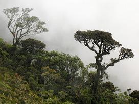 Biodiversidad y Conservación: Una guía para restaurar los ecosistemas de Colombia – Los páramos de la cordillera Oriental   Educación ambiental para la protección de páramos   Scoop.it