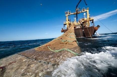 Los famosos se unen contra el desastre de la pesca de arrastre | environnement, | Scoop.it