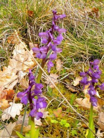 Découverte des orchidées | Actualité touristique Fumel-Vallée du Lot | Scoop.it