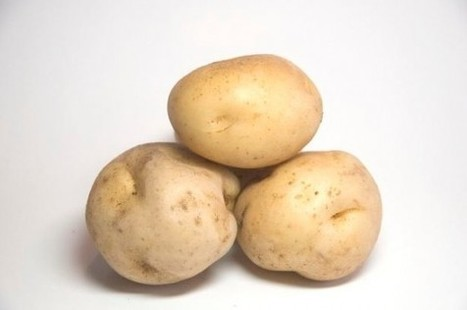 Saudi Potato Battery Could Be Commercially Available in One Year! | King Abdulaziz University | Scoop.it