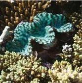 Aires marines protégées du Nord-est de la Nouvelle-Calédonie : ça ... | Protection des fonds marins | Scoop.it