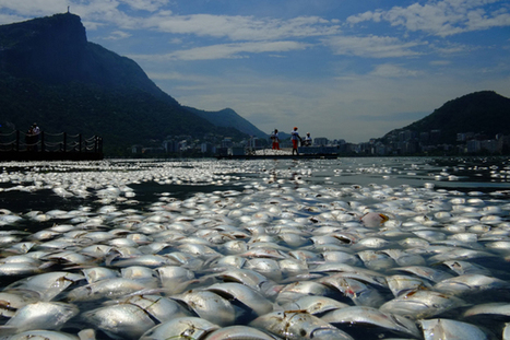 Shocking photos of Rio de Janeiro's pollution - New Zealand Listener | Aquaculture Directory | Scoop.it