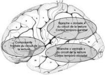 Troubles des apprentissages : dyslexie, dysorthographie, dyscalculie | Psycho & santé | Scoop.it