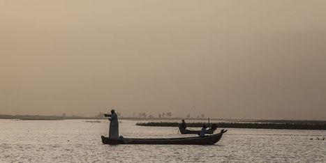 La vie retrouvée des fragiles marais irakiens   Nature to Share   Scoop.it