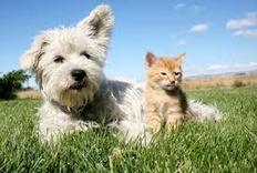 Pet Tips For Warm Weather | Pet Care tips | Scoop.it