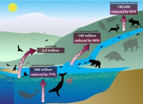 Scientists Are Worried About #WhalePoop, And Here's why ~ Vital #Nutrients #Environment | Rescue our Ocean's & it's species from Man's Pollution! | Scoop.it