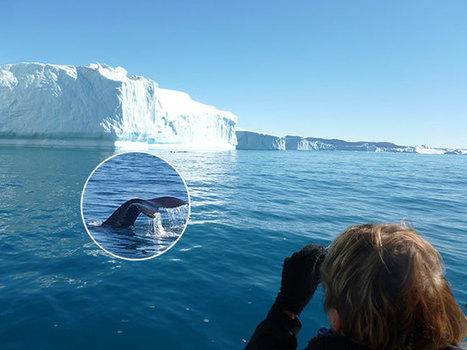 A la rencontre des baleines… – Olivier Nouaillas – Planète Verte – la Vie | Actualités écologie | Scoop.it