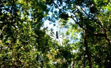 A la recherche des ancêtres des insectes | pour mon jardin | Scoop.it