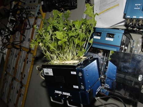NASA Wants to Build a Greenhouse on Mars | Erba Volant - Applied Plant Science | Scoop.it