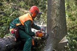 Huile chaîne tronçonneuse bio - Industrie forestière | News - Filière bois | Scoop.it