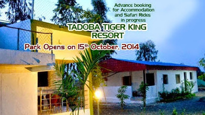 Tadoba Tiger King Resort - Google+ | Tadoba Tiger King Resort | Scoop.it