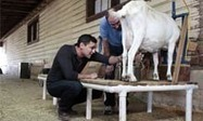 Synthetic biology and the rise of the 'spider-goats'   Science H   Scoop.it