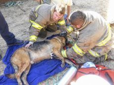 Firefighters revive dog after house fire | Compassion in Action | Scoop.it