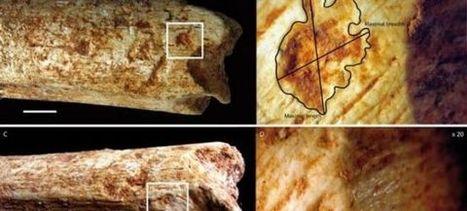 Préhistoire : Les humains auraient servi de repas aux carnivores selon des ossements retrouvés au Maroc | Aux origines | Scoop.it