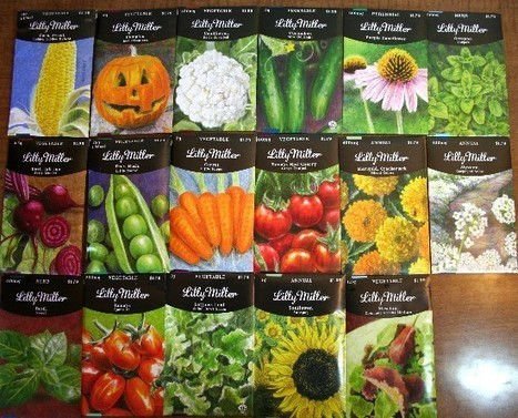 The Rainforest Garden: Win My Illustrated Seed Packets! | Annie Haven | Haven Brand | Scoop.it