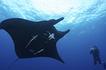 Save The Mantas | Marine Biology | Scoop.it