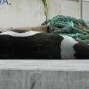 Rare Sea Creature Appears on Seattle Woman's Dock   Ocean Conservation   Scoop.it