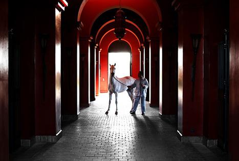 HAVE YOU MET DIEGO | Under Moroccan Lights | FAGUO | Scoop.it