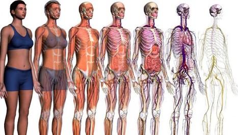 Google 'se colará' dentro del cuerpo humano | estusanidad.com | eSalud Social Media | Scoop.it