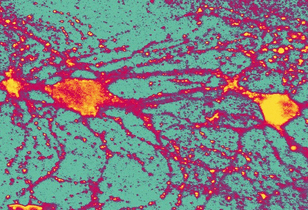 Futurity.org – When mice remember, brain cells reactivate | Wiki_Universe | Scoop.it