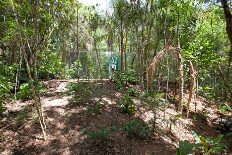 cristina iglesias: vegetation room inhotim | Digital-News on Scoop.it today | Scoop.it