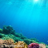 Une étude paneuropéenne majeure sur l'acidification des océans | Toxique, soyons vigilant ! | Scoop.it