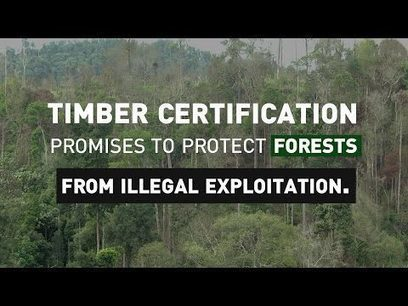 Making timber certification work for local markets   Ecosystèmes Tropicaux   Scoop.it