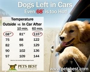 Dogs Left in Hot Cars | Pet Health Tips | Scoop.it