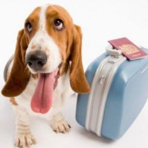 VOYAGER AVEC VOTRE ANIMAL…quelques règles à respecter ! | Animalerie en ligne | Scoop.it