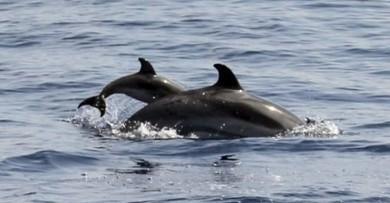 KRATIE et RDV avec des dauphins d'eau douce | Voyager Au Cambodge | Voyage Cambodge | Scoop.it